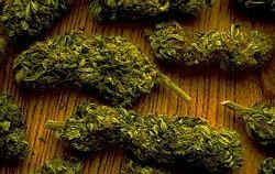 Colitas de Marihuana