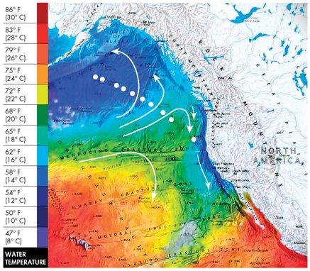 Fukushima pollution chart